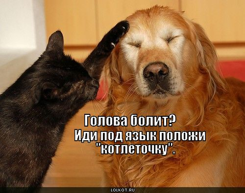 kotletochku-pod-yazyk_1364913678.jpg