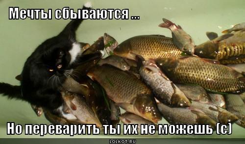 mechta-bokom_1365096700.jpg