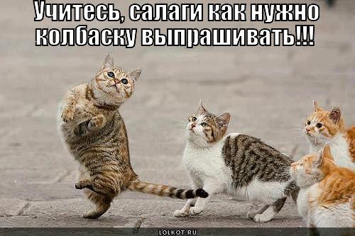 uchites-salagi_1366174347.jpg