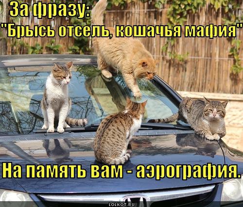 za-frazu-narisuyut-srazu._1365436611.jpg