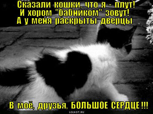 Кот бабник