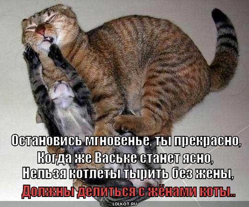 https://lolkot.ru/wp-content/uploads/2013/05/koty-dolzhny-delitsya_1369930164.jpg
