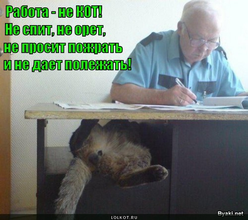 Про котов про работу