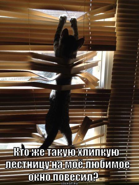 hlipkaya-lestnitsa_1370953390.jpg