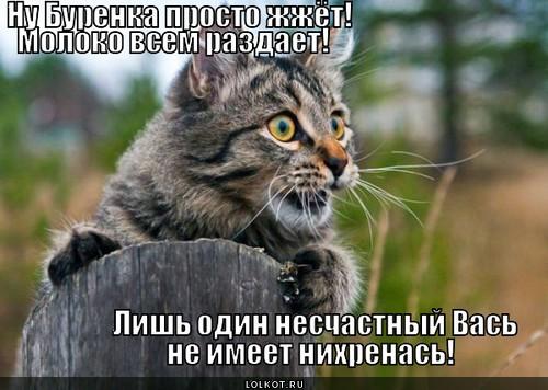 burenka-na-razdache_1374841679.jpg