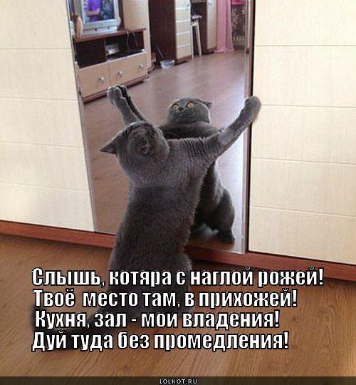moya-territoriya_1377942462.jpg