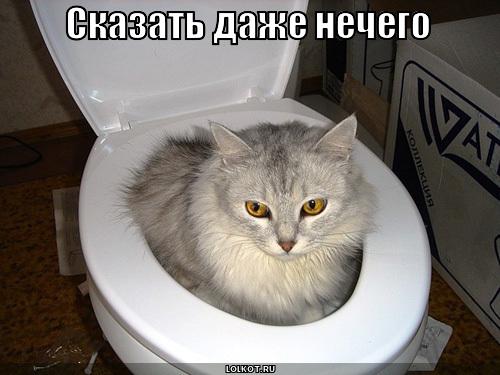 Почему коты пристают к беременным кошкам