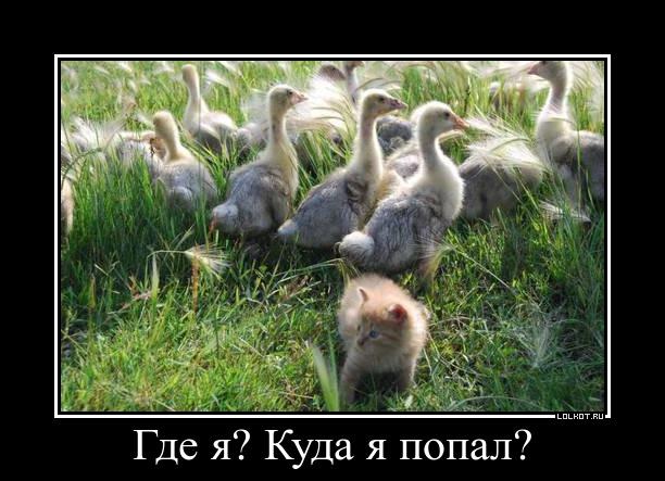 kuda-ya-popal_1378401237.jpg