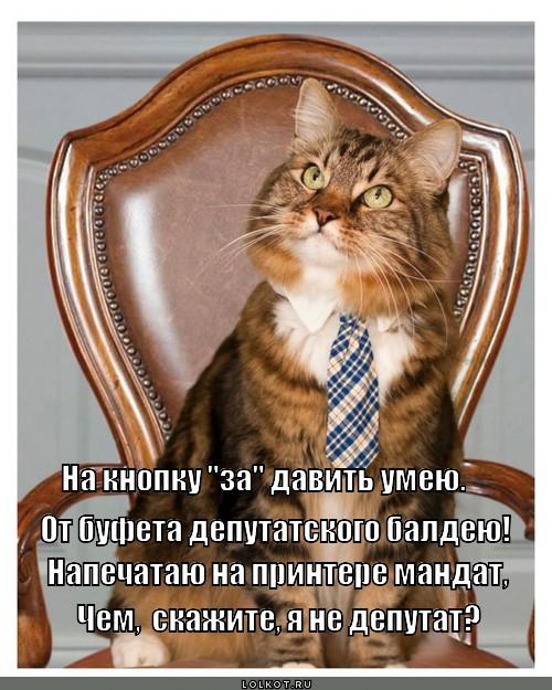 Собачки, Кошечки и винкс волшебницы на картинках +игра одевалка