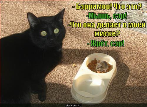 http://lolkot.ru/wp-content/uploads/2013/12/ne-ya-ne-ponyal_1387352738.jpg