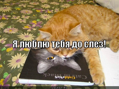 я люблю тебя до слёз картинка