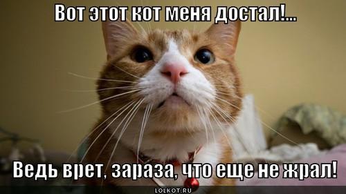 http://lolkot.ru/wp-content/uploads/2014/01/kotu-ne-verit_1390895256.jpg