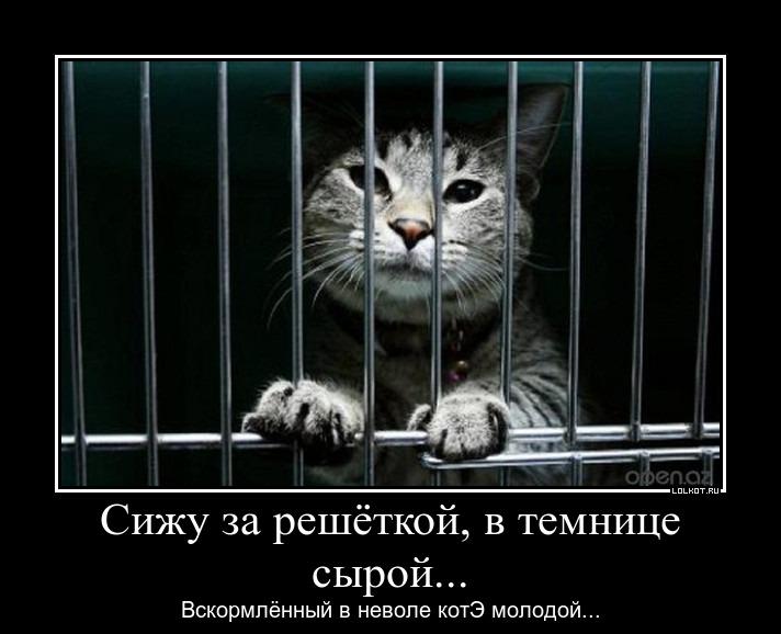 temnitsa-_1392984805.jpg