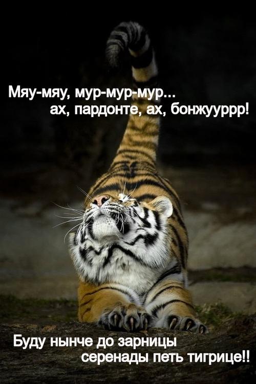 Тигр картинки с надписями