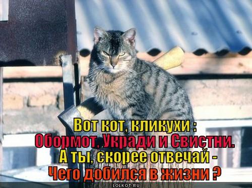 Не вини кота