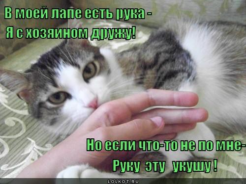 kot-lizhet-kusaet-ruki