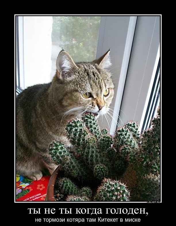 Картинка не верь коту его кормили когда дело