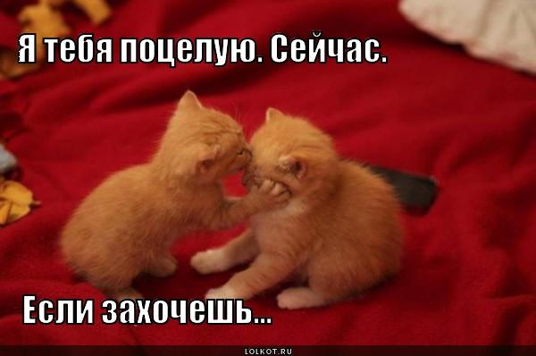 я старый я не знаю слов любви: