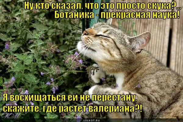 Быть ботаником не стыдно!