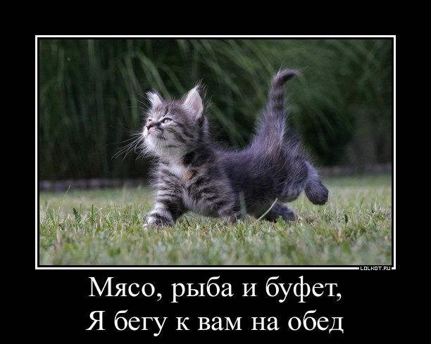 рыба и кот фото