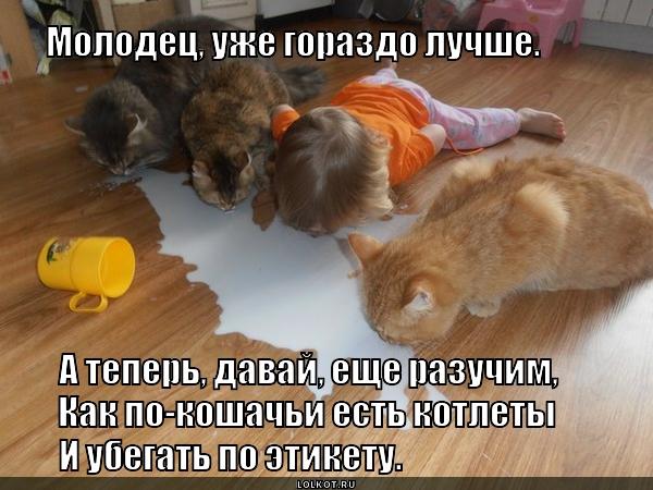 """Кошачий этикет """"Все включено"""""""