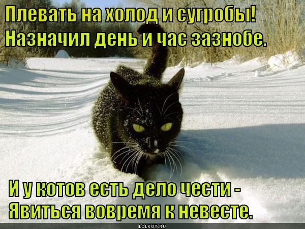 И мороз не пугает