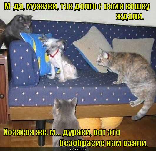 Ожидали кошку, получили...