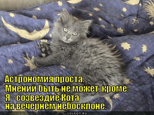 Созвездие кота