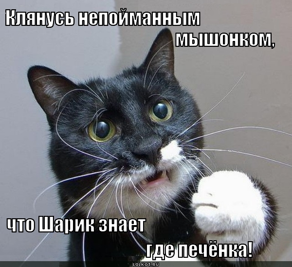 Я честный кот