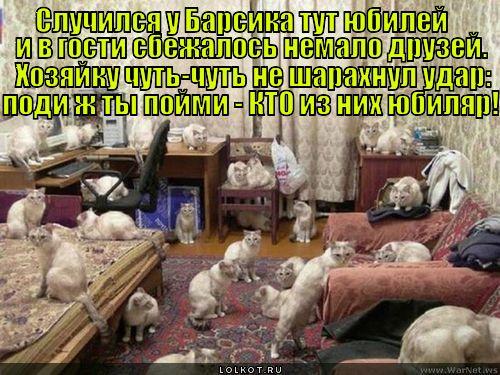 Кошачий юбилей