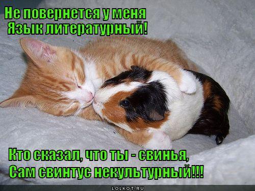 Смешные картинки кошек с прикольными