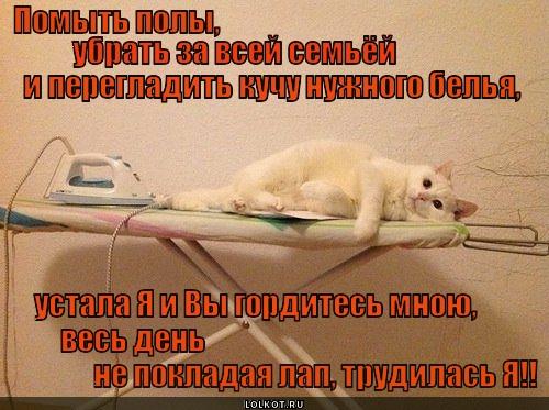 Котяка-трудяга