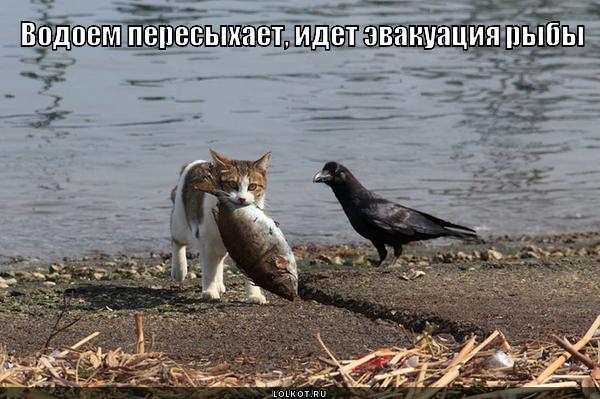 Эвакуация рыбы