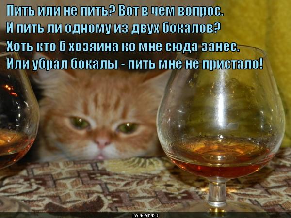 Прикольные картинки пить или не пить, парам