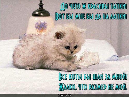 Кошка-скорохожка