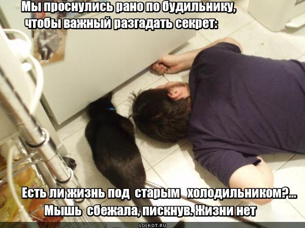 Жизнь под холодильником