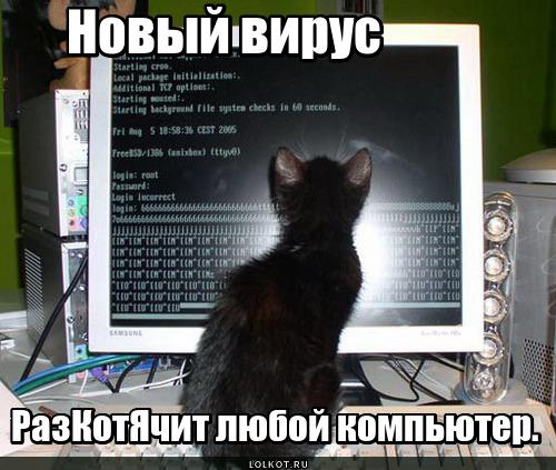 Котячий вирус