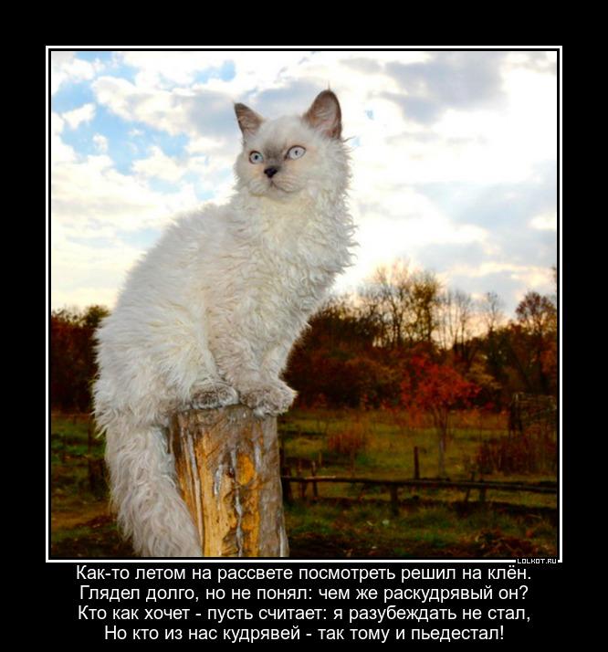 Котявочка-кудрявочка