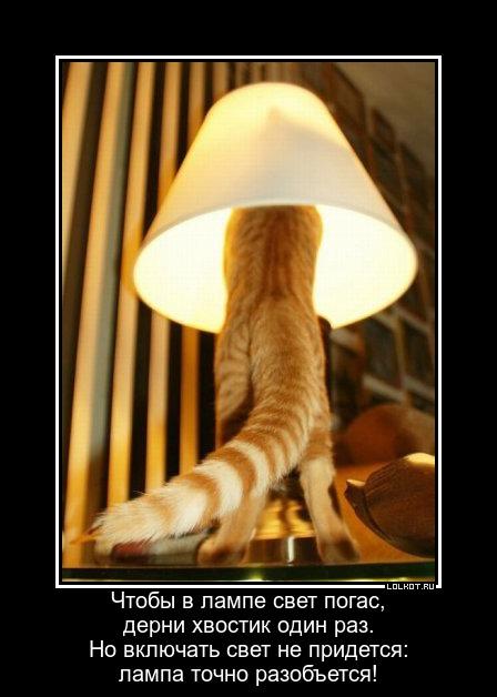 Теплый ламповый кот