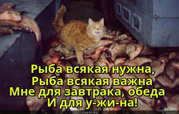 Кот по кличке Рыбокомбинат