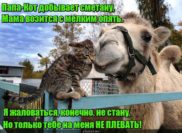 Верблюжья услуга