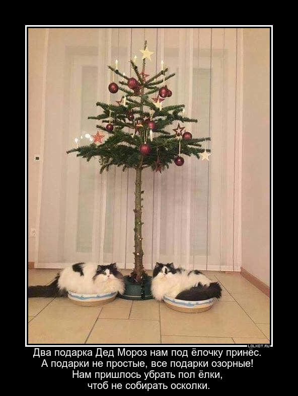 Коты из мешка