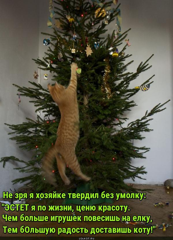 Нарядная ёлка - радость коту