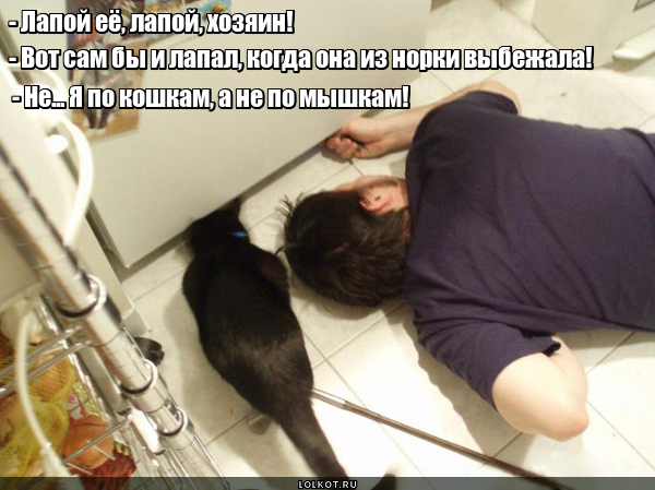 Ценитель кошек