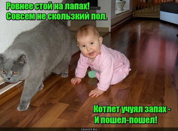Воспитанный котами