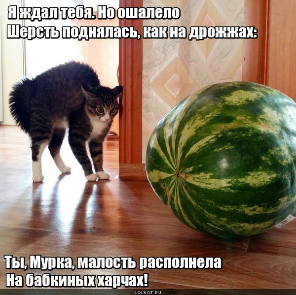 В кота корм