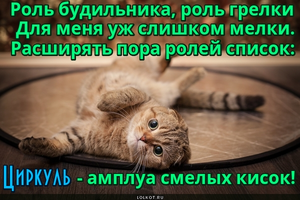 Котикус геометрикус