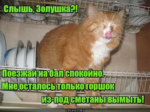 Посудомоечная кошинка