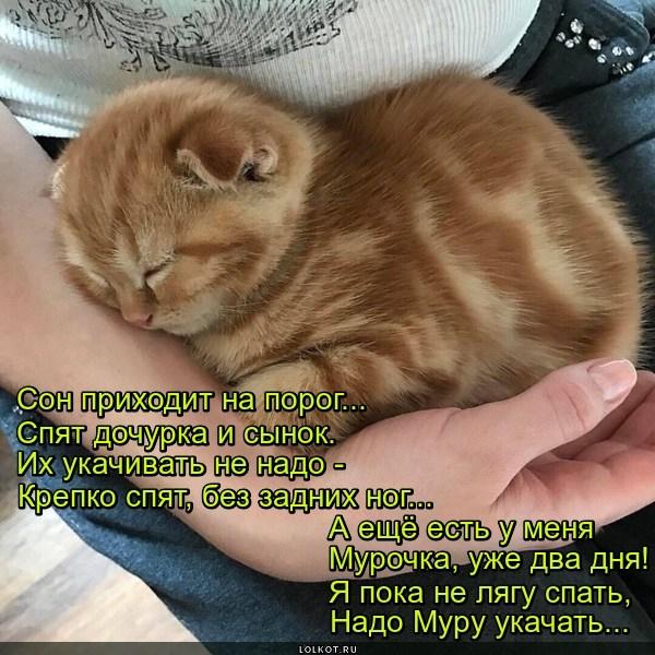 Котомама
