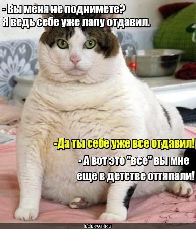 Домкрат для кота